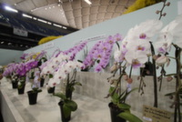 В Вологде откроется музей орхидей