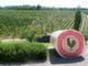 Крупнейший фестиваль вина кьянти пройдёт в Италии
