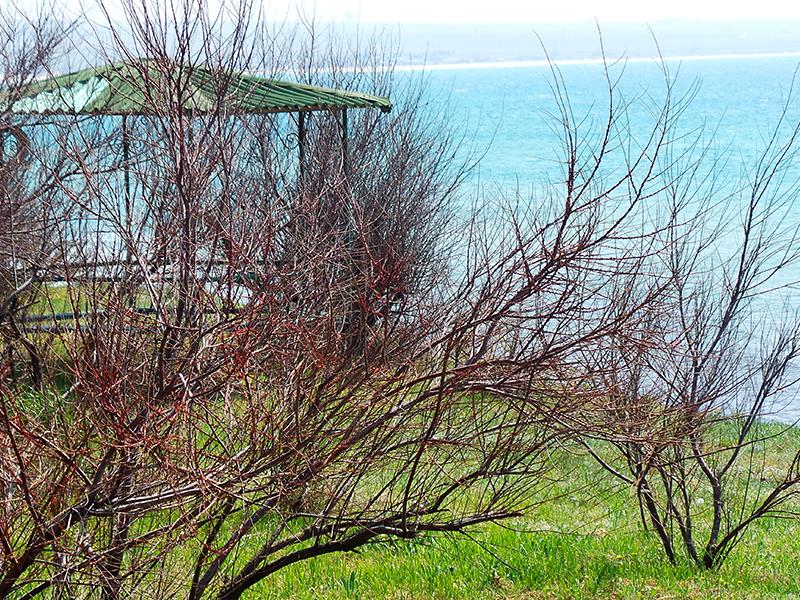 Весенний залив