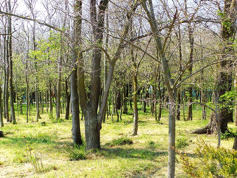 Великолепный крымский лес