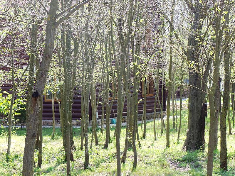 Коттедж, окруженный лесом