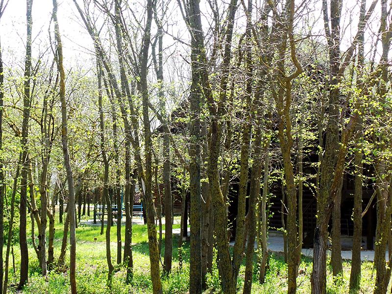 Нежные, зеленеющие ростки деревьев