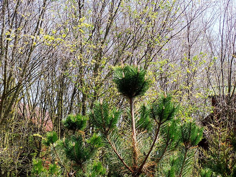 Зеленеющая природа Крыма