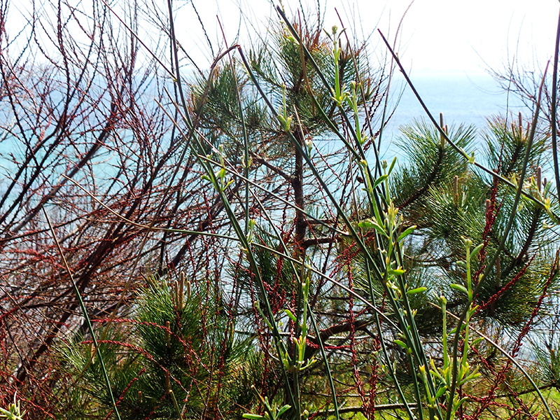 Яркая зелень крымского побережья