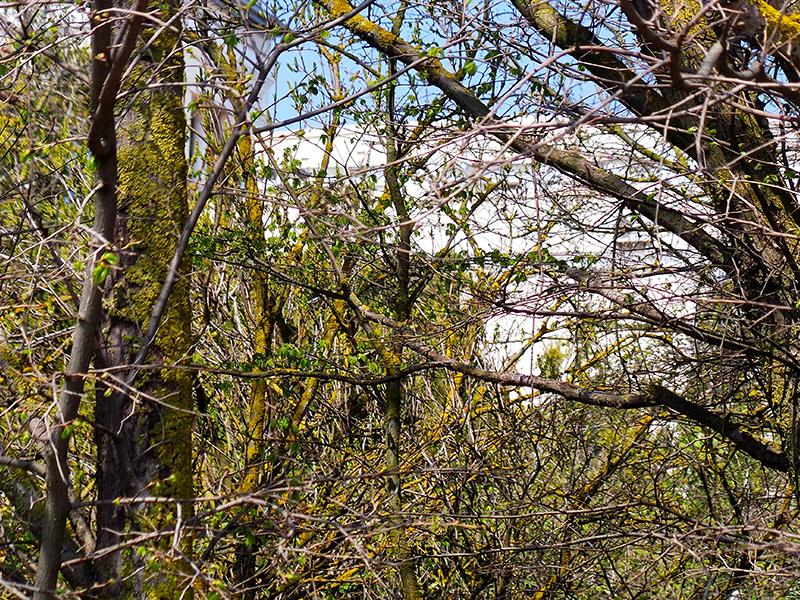 Вид на корпус Замок сквозь побеги весеннего леса