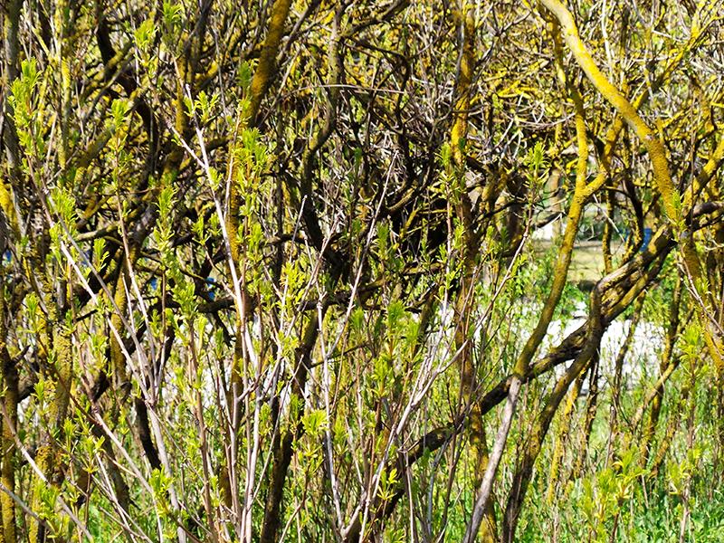 Яркая и разнообразная весенняя зелень